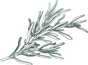 Sage Thyme Solutions - Herb - Rosemary