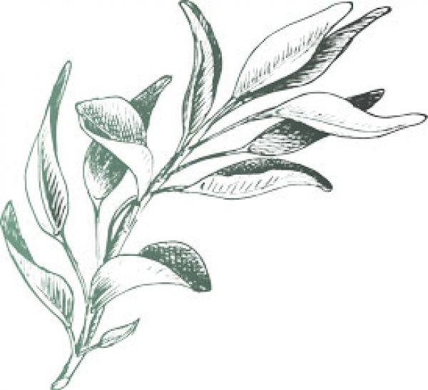Sage Thyme Solutions - Herb